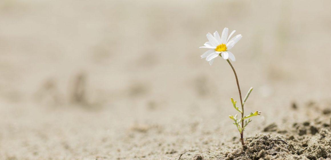 La desertificación y la sequía precisa menos 'regadío'